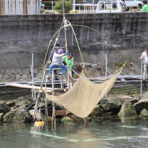 紀州湯浅のシロウオまつり