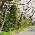 湯浅城公園