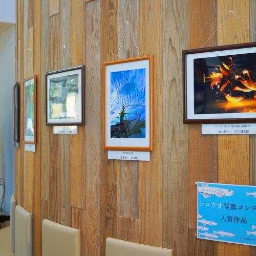 令和2年度シロウオ写真コンテスト受賞作品展